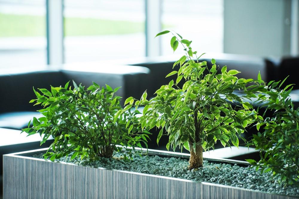 groen op kantoor gezellig