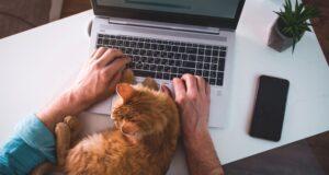 Zo kun je geld verdienen met het schrijven van artikelen
